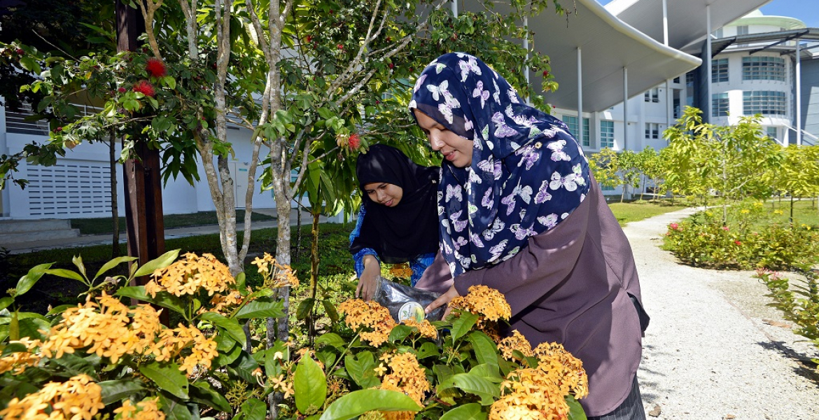 Compost fertiliser from palm oil mill waste for growing organic crops